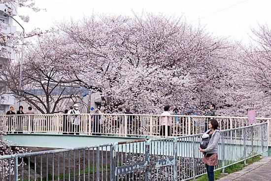 桜めぐり3-2