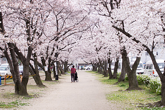 桜めぐり3-6