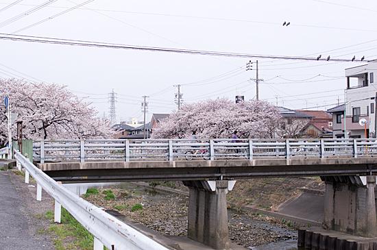 桜めぐり3-8