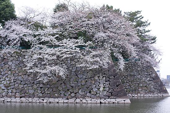 桜めぐり4-4