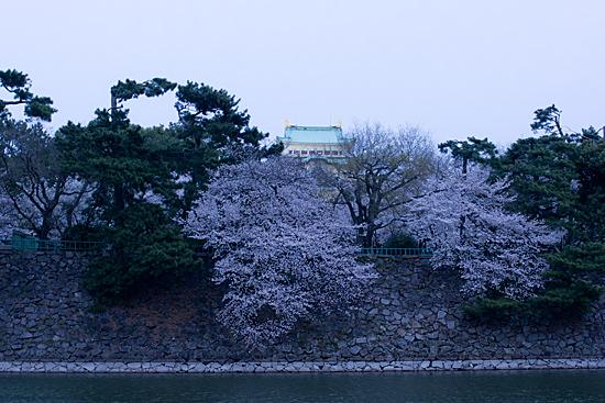 桜めぐり4-6