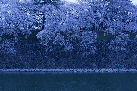 桜めぐり4-8