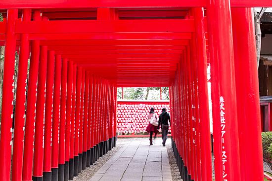 犬山桜-5