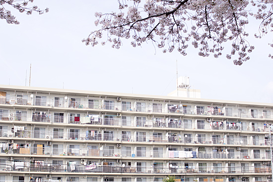 天白川桜-10