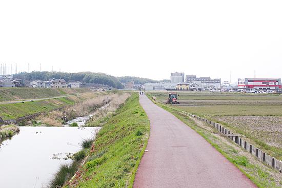 天白川桜-2