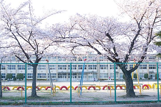 桜の思い出-1