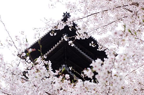 桜の思い出-10