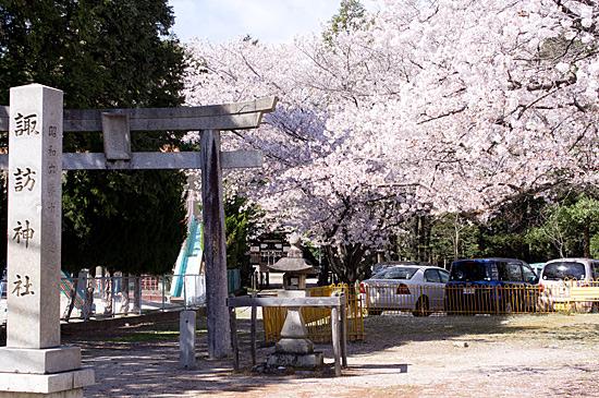桜の思い出-11