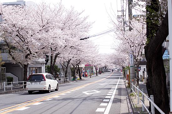 桜の思い出-4