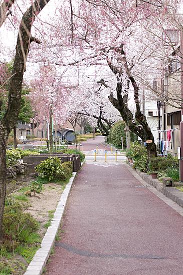 桜の思い出-7