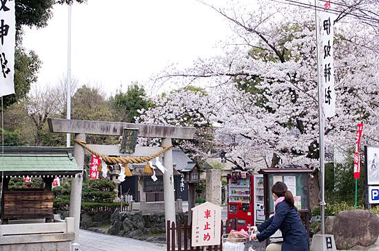 桜の思い出-8