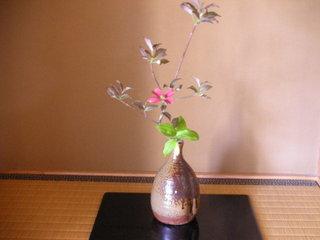 アメリカ花水木