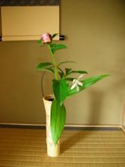 芍薬と紫蘭