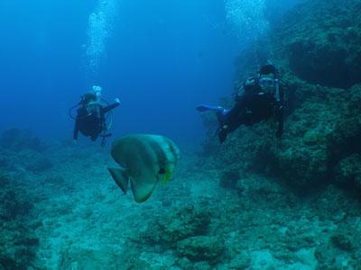 青の洞窟ボートダイビング