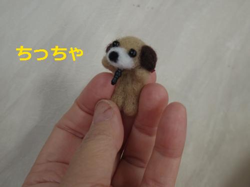 IMGP0663.png