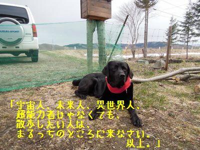 DSCN0531_20130504175825.jpg