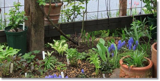 パーゴラ下花壇 2