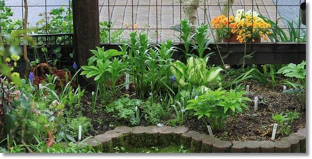 パーゴラ下花壇 1