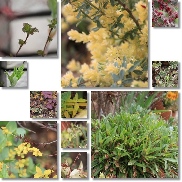 花木花壇 1