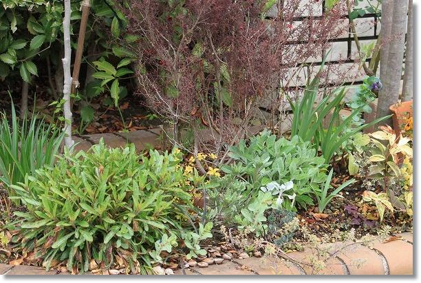 花木花壇 2