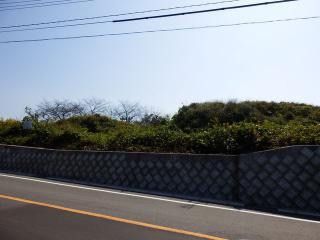 PA210891a.jpg