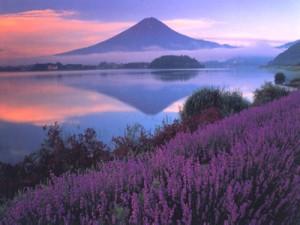 富士山情報