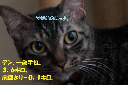 2014-fuyu-03.jpg