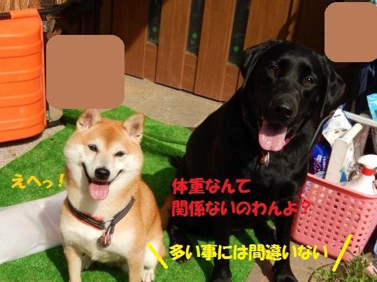 2014-fuyu-11.jpg