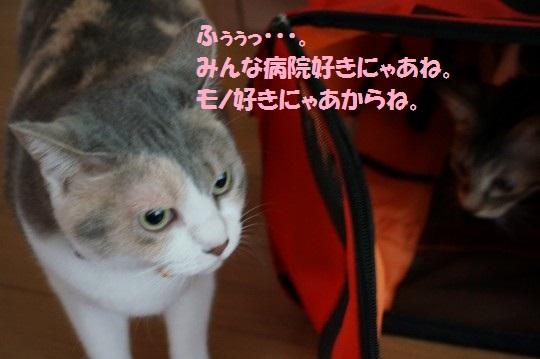 20140915-07.jpg