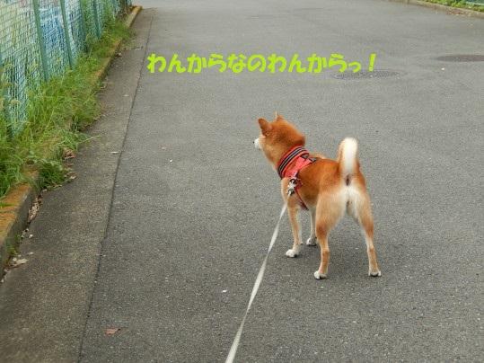 20140916-001.jpg