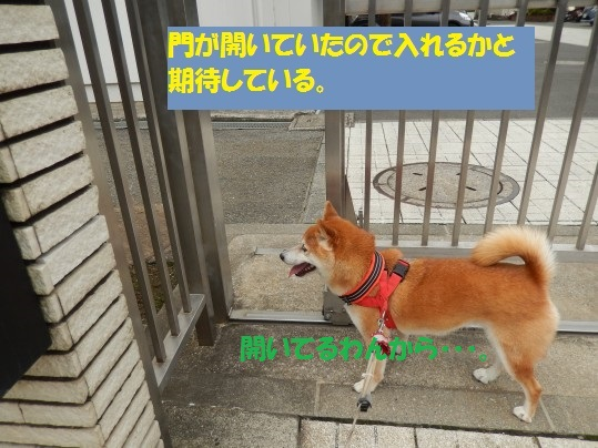 20140916-003.jpg