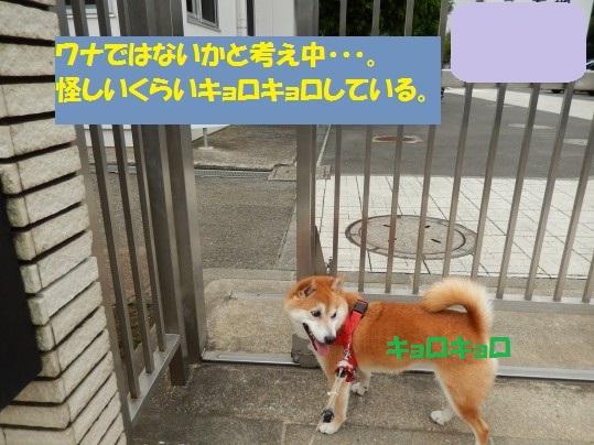 20140916-004.jpg