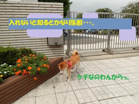 20140916-005.jpg