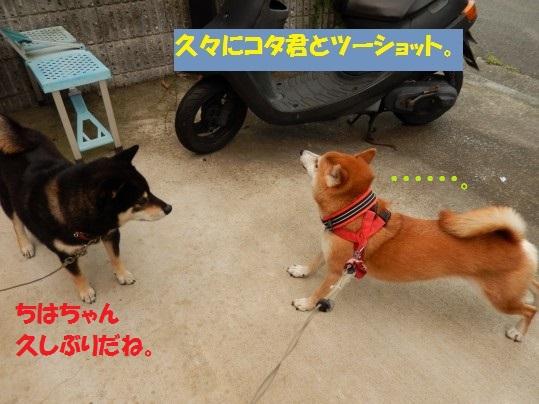 20140916-006.jpg