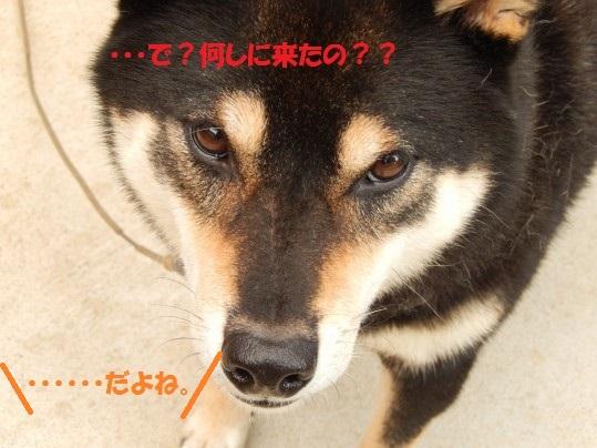 20140916-010.jpg