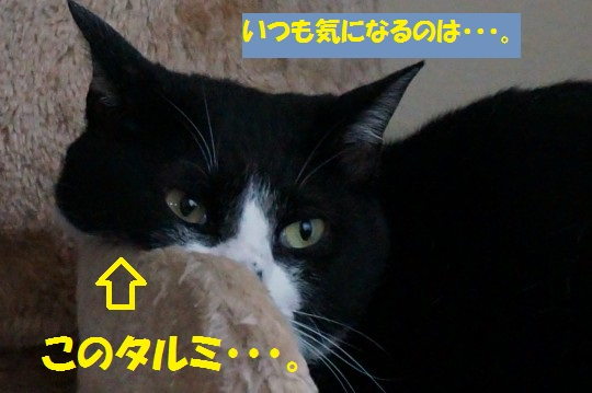20140917-04.jpg