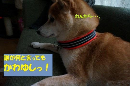 20140917-05.jpg