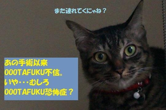 20140917-10.jpg