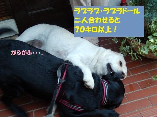 20140917-11.jpg
