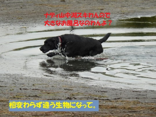 20140922-008.jpg