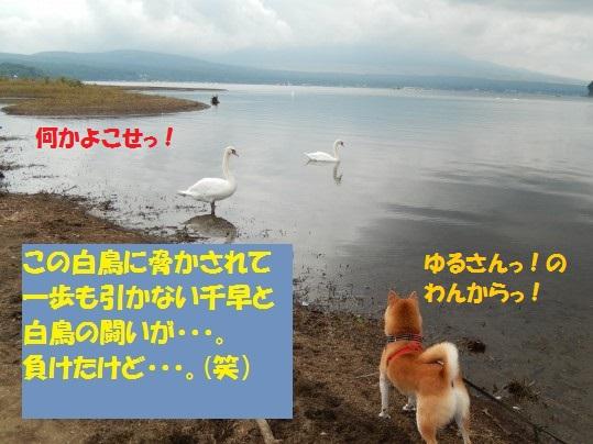 20140923-01.jpg