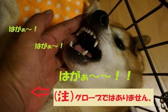 20140925-03.jpg