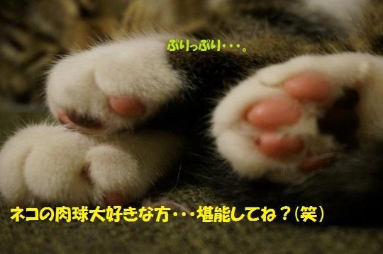 20140927-01.jpg