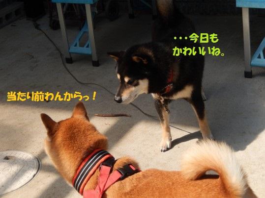 20140929-11.jpg