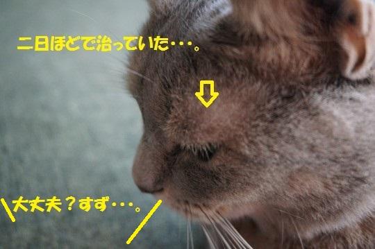 20141004-01.jpg