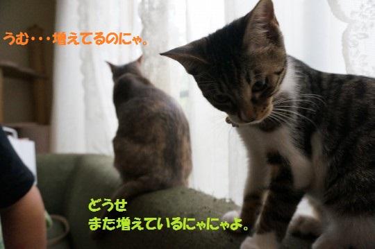 20141007-0013.jpg