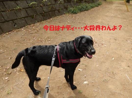 20141007-01.jpg