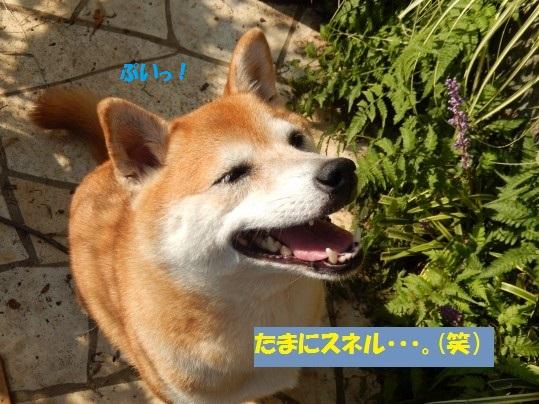 20141010-004.jpg