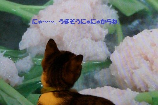 20141010-009.jpg