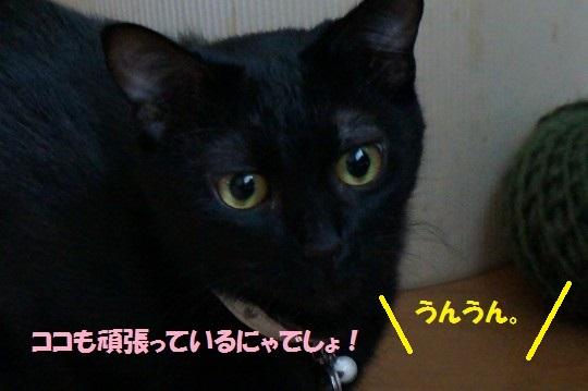 20141012-001.jpg